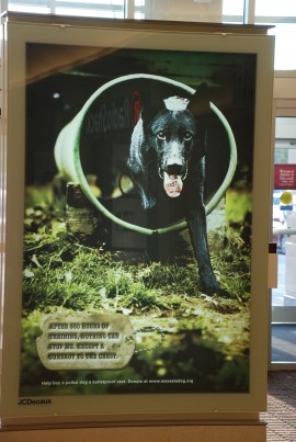 K-9 Jaeger (Essex County Sherriff's Department) mall banner